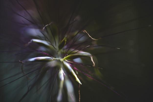 Closeup tiro de uma flor exótica com pétalas transparentes