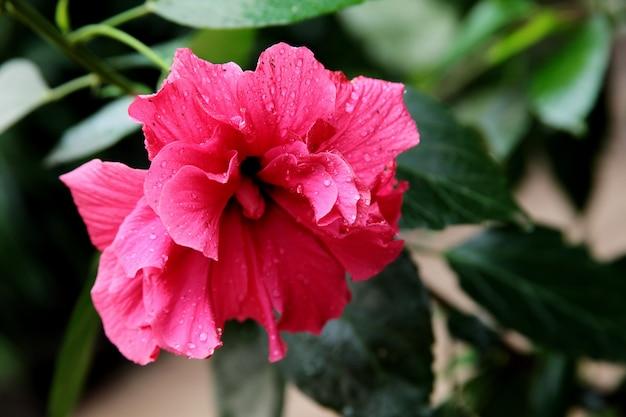 Closeup tiro de uma flor rosa com estame longo em uma floresta pacífica