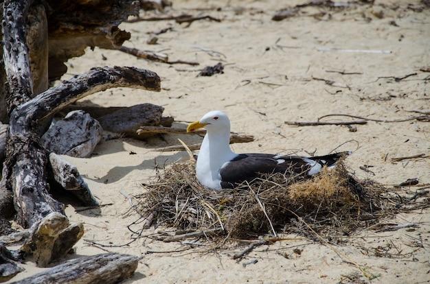 Closeup tiro de uma gaivota na nova zelândia