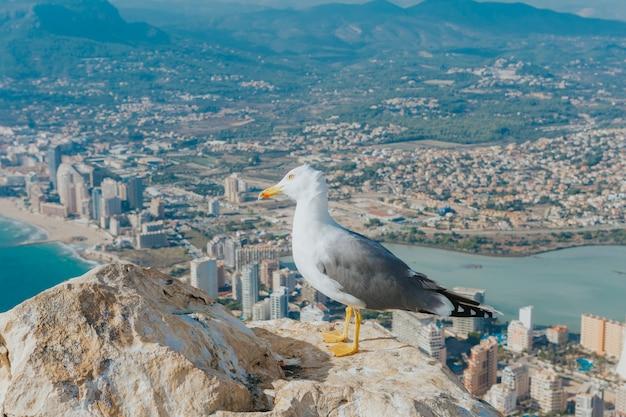 Closeup tiro de uma gaivota no topo de uma rocha com vista para a cidade na ilha de calpe, espanha