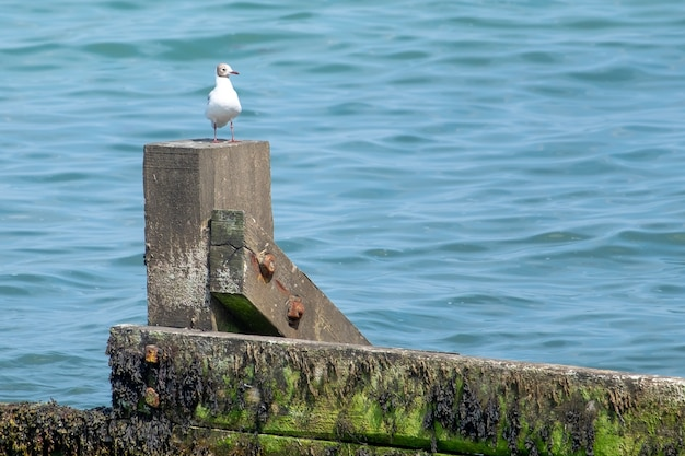 Closeup tiro de uma gaivota parada na pedra com o mar