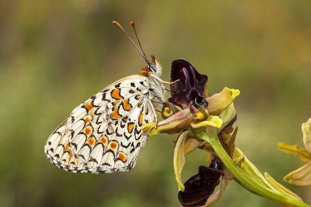 Closeup tiro de uma mariposa em uma planta na floresta