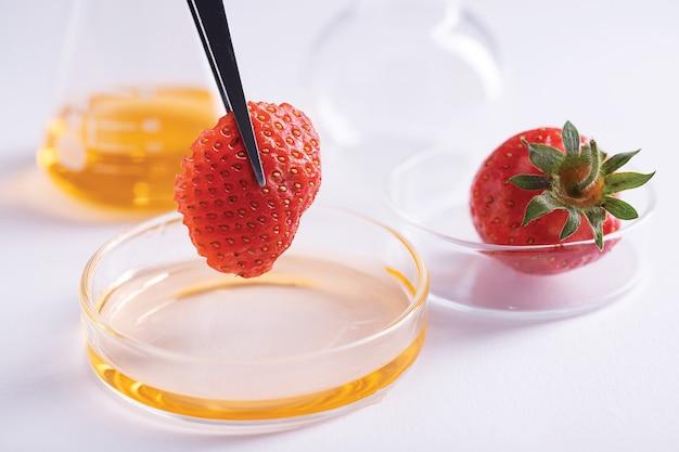 Closeup tiro de uma pinça segurando um pedaço de morango sobre um prato com um líquido amarelo em um laboratório