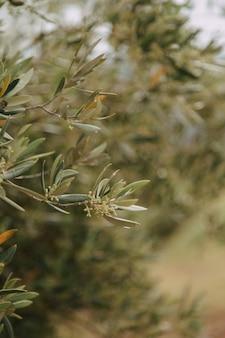 Closeup tiro de uma planta verde