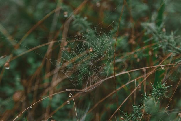Closeup tiro de uma teia de aranha coberta com gotas de orvalho