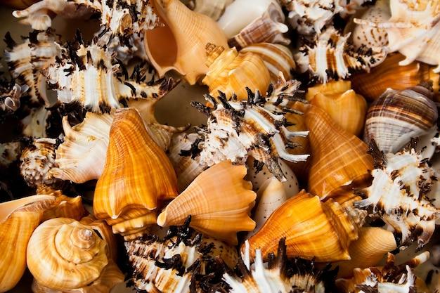 Closeup tiro de vários caracóis e conchas do mar