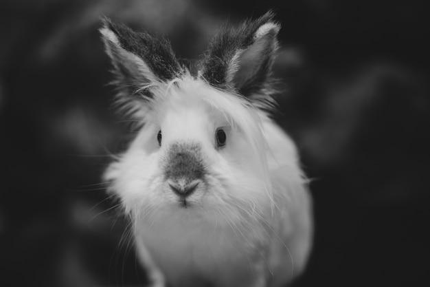 Closeup tiro em escala de cinza de um coelho branco no escuro