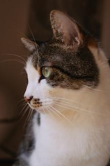 Closeup tiro seletivo de um lindo gato doméstico com olhos verdes claros