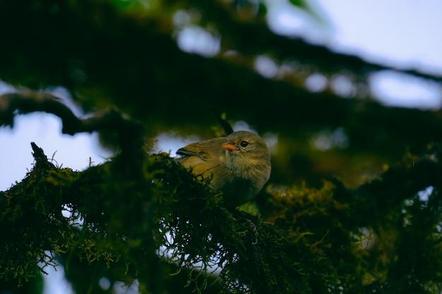 Closeup tiro único de um pássaro empoleirado em um galho de árvore verde