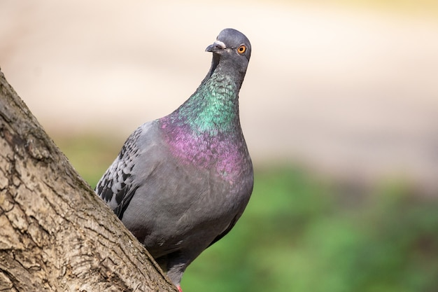 Closeup tiros de pássaros