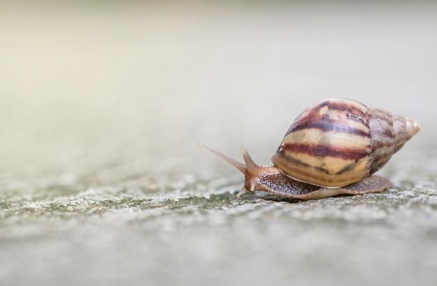 Closeup, um caracol, movendo-se na rua chão no plano de fundo texturizado ao ar livre