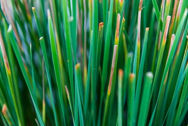 Closeup, um papiro folhas e céu azul