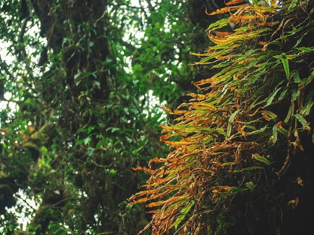 Closeup várias plantas na floresta tropical