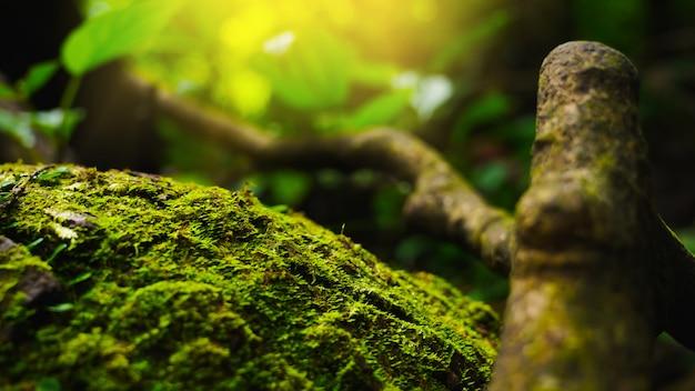 Closeup verde musgo e samambaia em ambiente natural fértil ou abundância