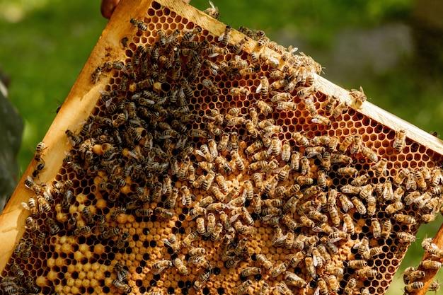 Closeup vista das abelhas trabalhando