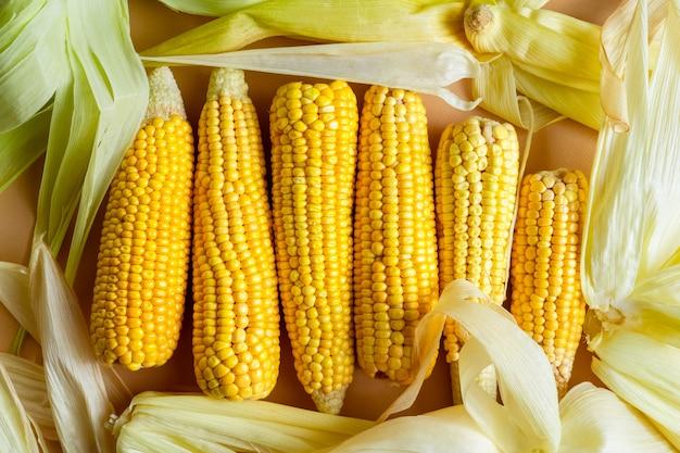 Closeup vista de espigas de milho amarelo cru com folhas dispostas em uma fileira