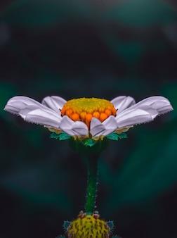 Closeup vista de uma bela flor de pétalas brancas em um fundo desfocado