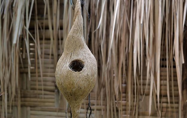 Closeup vista de vespas e enorme ninho abaixo do telhado de amianto
