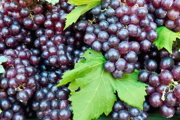 Cluster de uva fresca com folhas verdes