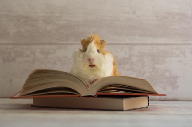 Cobaia no livro aberto