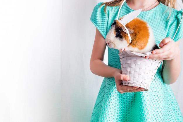 Cobaia pequena muito de inquietação na cesta branca com seu amigo.