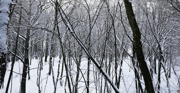 Coberta por uma floresta de neve fofa no inverno, paisagem em condições geladas