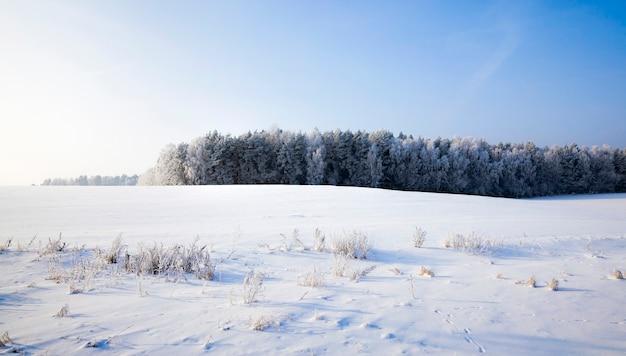Coberta por uma floresta de neve fresca branca e fofa no inverno, paisagem em condições frias e geladas de inverno em dia ensolarado