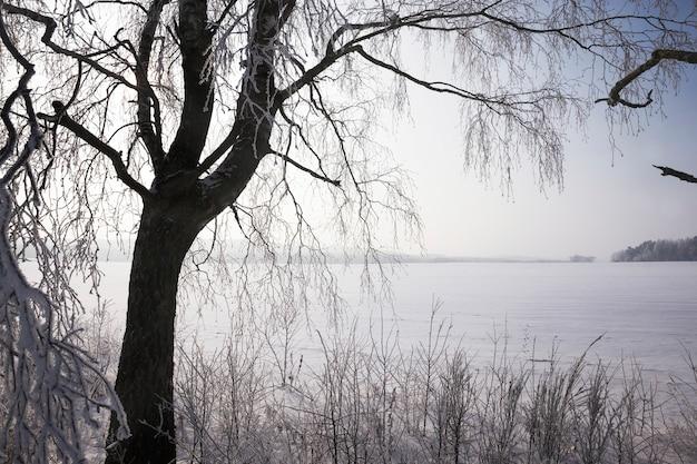 Coberta por uma floresta de neve fresca branca e fofa no inverno, paisagem em condições geladas de inverno em dia ensolarado