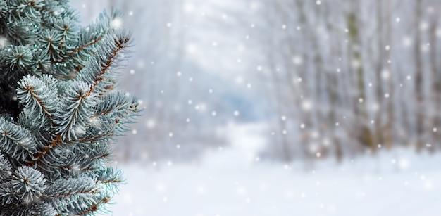 Coberto com abeto de galho de neve no fundo desfocado durante a queda de neve