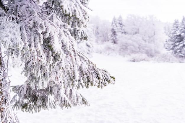 Cobertura de galho de árvore congelada com neve e gelo fechado tiro