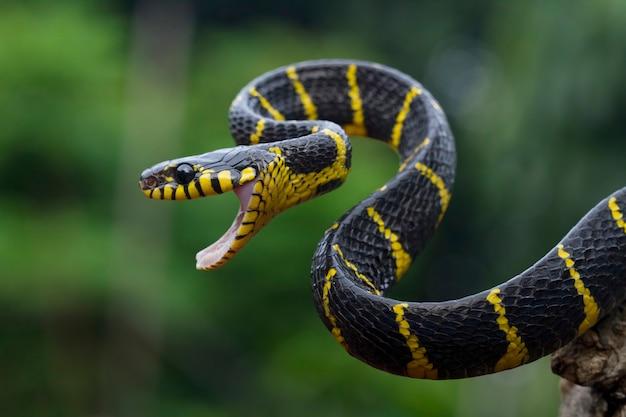 Cobra amarela rodeada de madeira