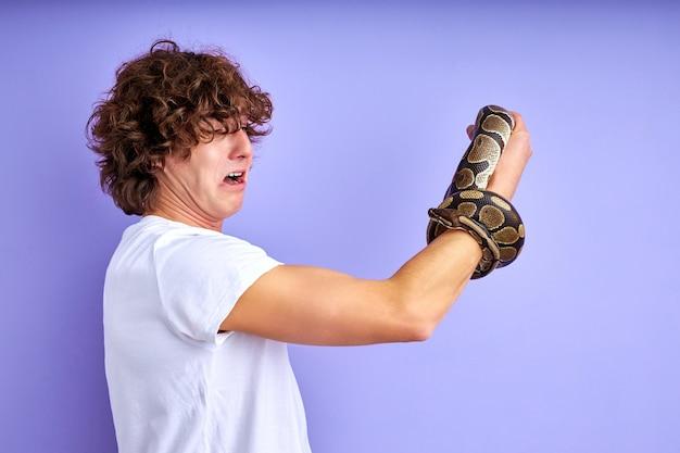 Cobra amarrada à mão, macho assustado está em choque, vista lateral em cara encaracolado olhando para o braço com cobra isolada na parede roxa