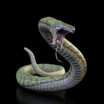 Cobra com uma ilustração de mouth.3d aberta.