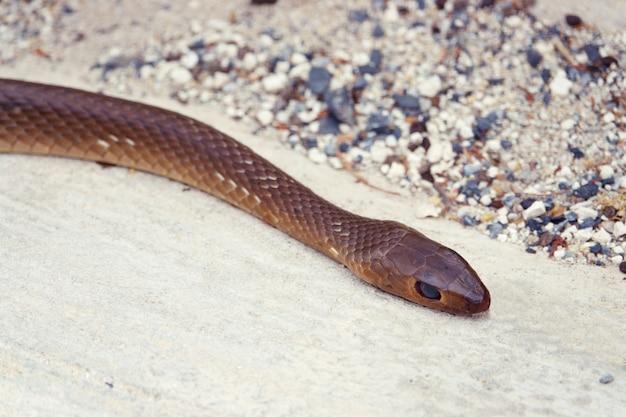 Cobra da morte morreu perto no chão de concreto