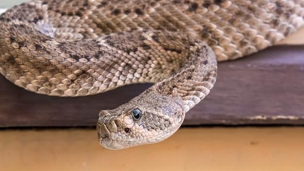 Cobra marrom rastejando na mesa