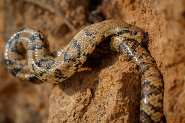 Cobra selvagem de perto no habitat natural