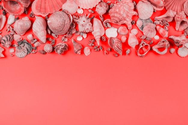 Cobrança, de, seashells, ligado, coral, fundo