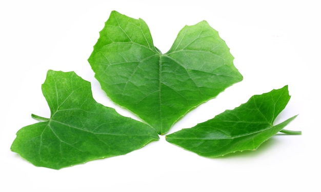 Coccinia cordifolia cogn ou folhas medicinais de telakucha