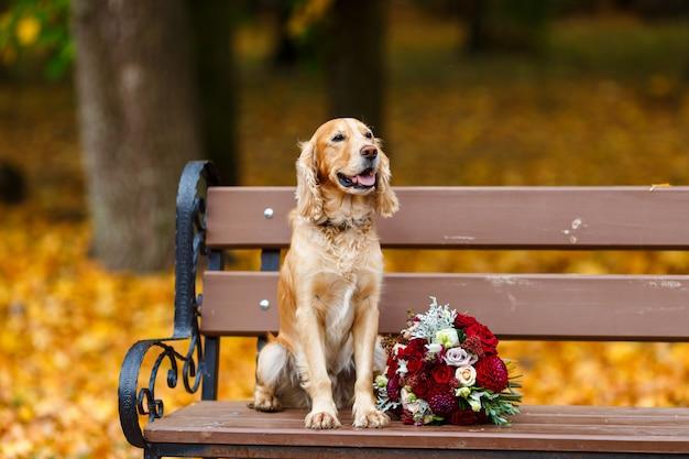 Cocker spaniel grande e treinado, sentado perto de buquê de noiva de flores vermelhas