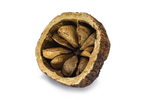 Coco de castanha do brasil aberto ao meio, com casca sobre fundo branco, noz comum da américa do sul