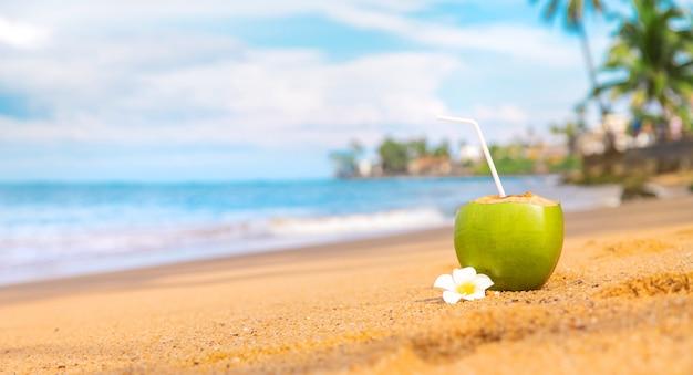 Coco em um coquetel de praia.