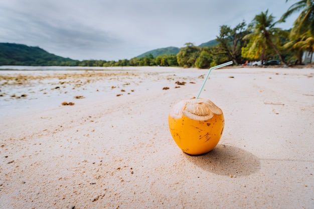 Coco em uma praia ensolarada na ilha de mahe, seychelles.