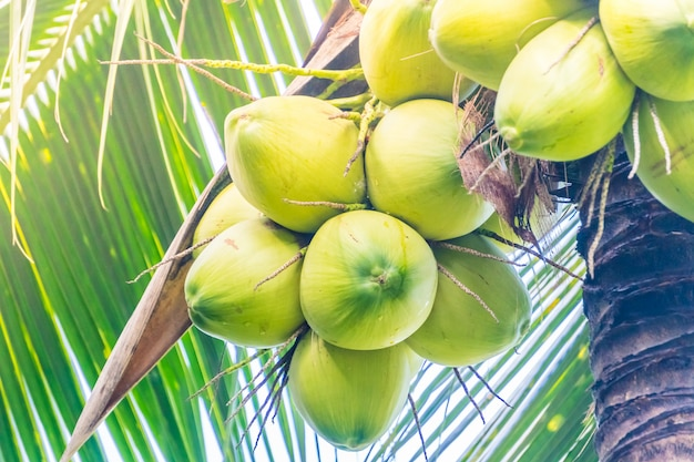 Coco, fruta