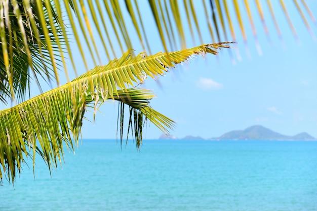 Coco, palma, árvore, com, luz solar, ligado, a, verão oceano azul, céu, e, ilhas, praia tropical, mar