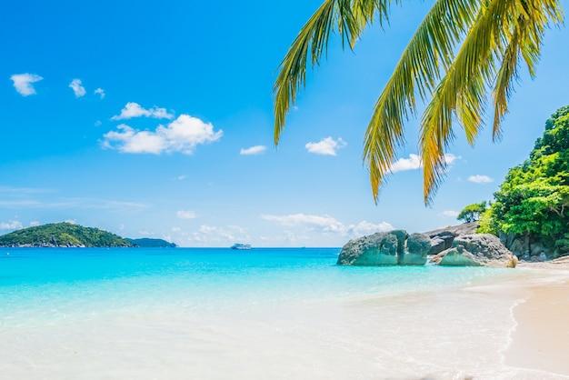 Coco, palma, árvore