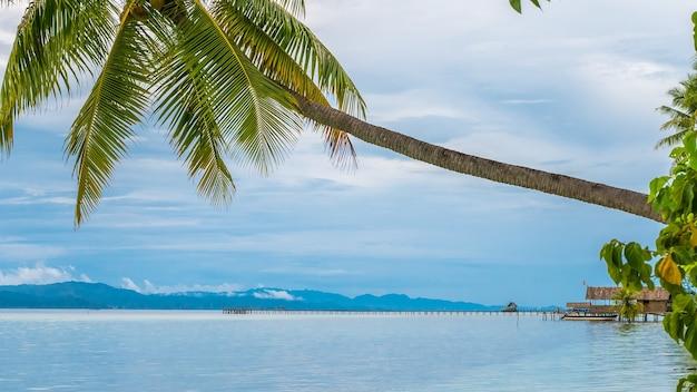 Coconat palm na ilha de kri, homestay e pier. raja ampat, indonésia, papua ocidental.