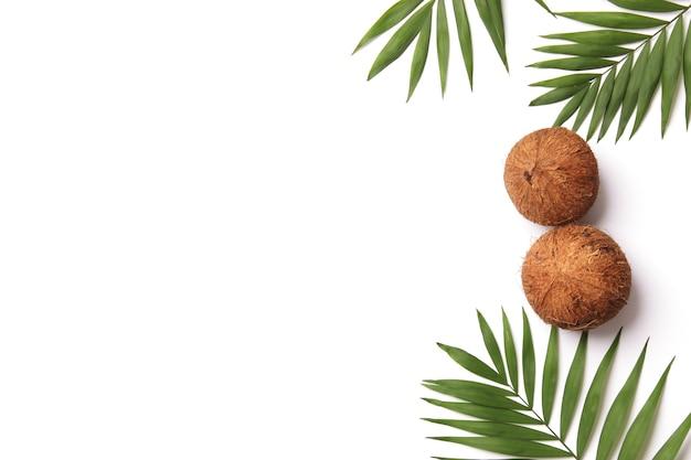 Cocos e ramos de palmeira em um fundo branco em um estilo minimalista com espaço para texto