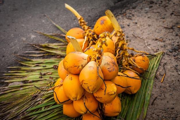 Cocos frescos nas folhas.