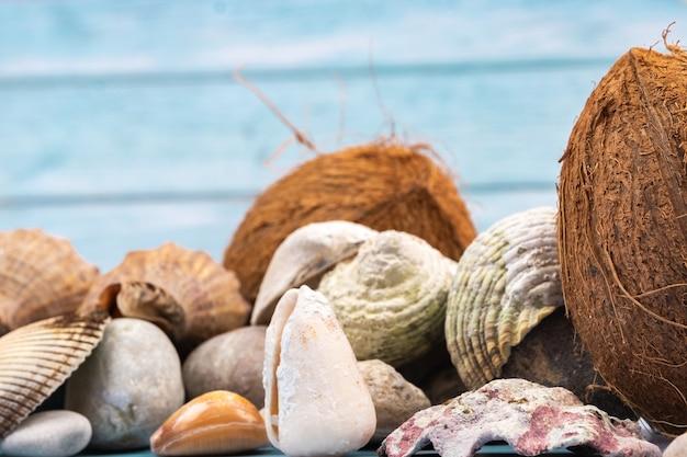 Cocos, pedras e conchas no conceito de praia