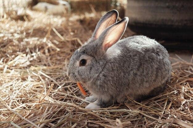 Coelhinha de páscoa comendo cenoura
